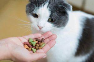 cat food singapore